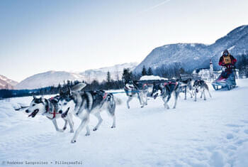Sled dog camp Pillersee © Andreas Langreiter - PillerseeTal
